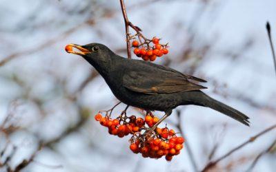 Grow a Garden for Birds